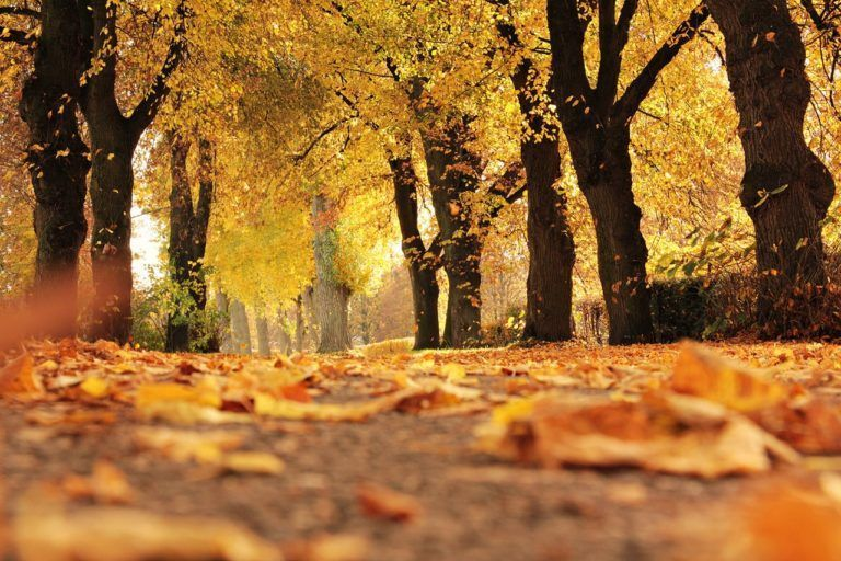 6 Reasons to visit Madrid during autumn and winter
